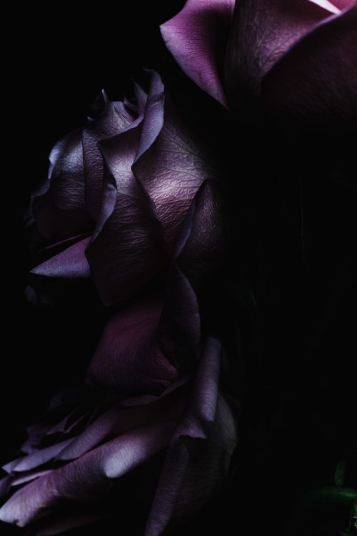 RosamariaGFrangin | ColorDesire Purple | Decaying Flowers by Billy Kidd