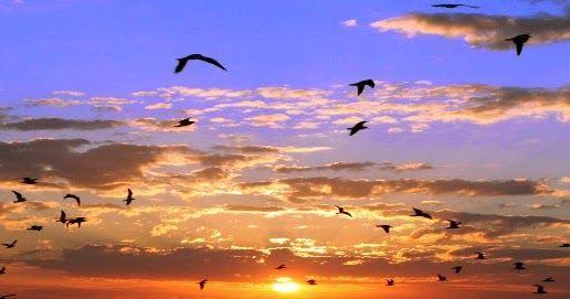 """El International Dawn Chorus Day  ( Día internacional del Coro al Amanecer) celebra el """" milagro diario de la naturaleza """". Se entiende..."""