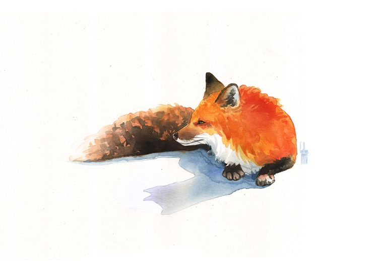 Just a fox in watercolors Illustration by Guillem Marí, 2014.
