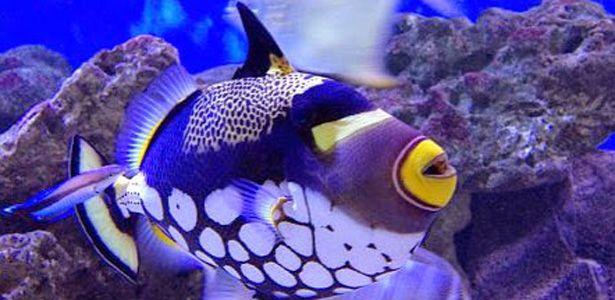 Aquarium de I'Ile Maurice