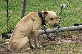 Regione Marche, chiesto il ritiro della proposta di legge che riammette catene e gabbie per i pet :http://www.qualazampa.news/2016/10/04/regione-marche-chiesto-il-ritiro-della-proposta-di-legge-che-riammette-catene-e-gabbie-per-i-pet/