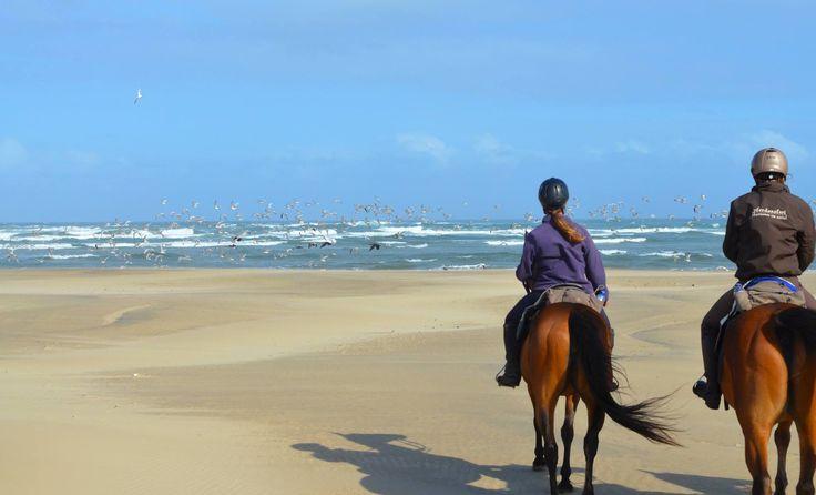 A cloud of birds rise to symbolically in honor of the horses ...  www.wildcoasthorsebackadventures.com?utm_content=buffere88b5&utm_medium=social&utm_source=pinterest.com&utm_campaign=buffer