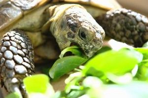 Things to Know Before You Buy a Pet Tortoise - PetSolutions