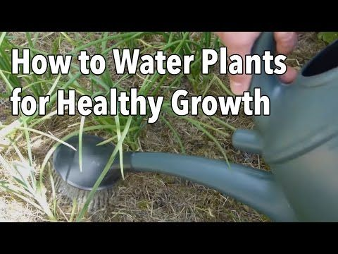 Watering Your Vegetable Garden: How To Water Plants For Healthier Growth    YouTube