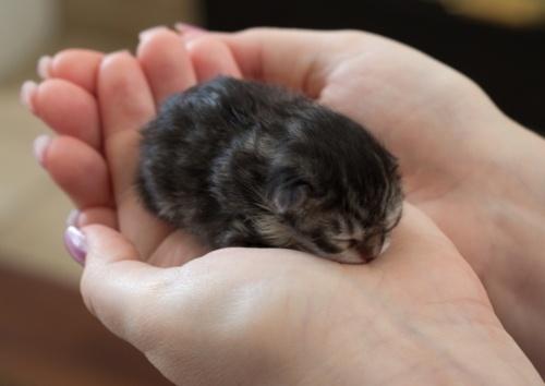 Recém-nascido