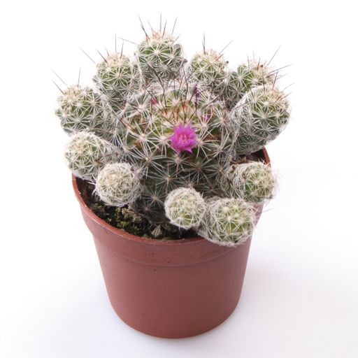 Best 25 Small Cactus Plants Ideas On Pinterest Mini