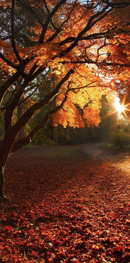 Wonderful autumnal sunset at the Westonbirt Arboretum near Tetbury in Gloucestershire, England • photo: Gary King