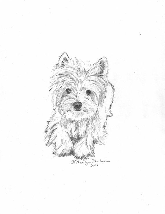 Custom Pet Drawing in Pencil from your photograph by baybeari, $45.00  ...I think we need this for Chloe!! :)