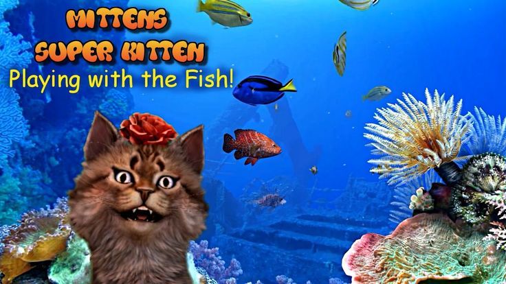 Mittens Super Kitten: Playing with the Fish.
