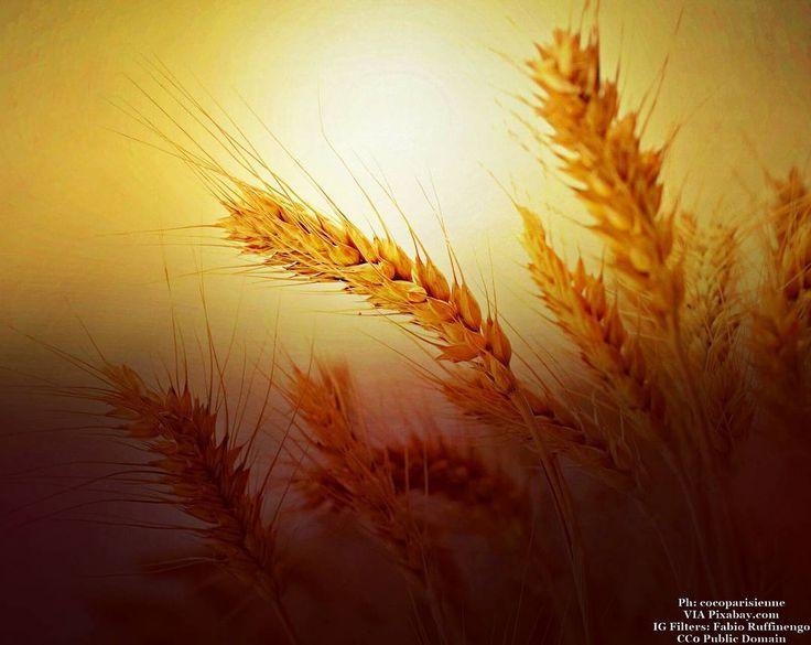 Ain't no sunshine when... #food #foodnetwork #foodblogger #foods #foodstyling #foodbeast #foodstagram #fooddiary #foodshare #foodphoto #foodiegram #foodaddict #foodpics #foodies #foodisfuel #foodprep #foodoftheday #foodlovers #health #healthfood #healthyeating #healthyfood #sunset #sun #pastalovers #harvest #crop #pasta #wheat