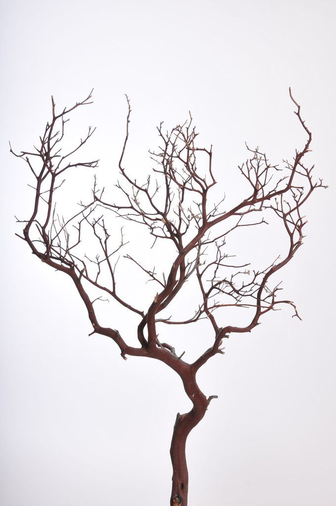 "Manzanita Branches in Natural Color Approx. 36-46"" Tall 10 per Case <br>Ships Alone - US Only"