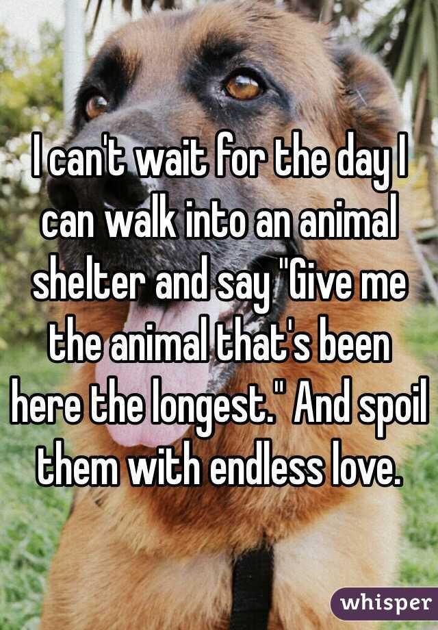 """I can't wait for the day I can walk into an animal shelter and say ""Give me the animal that's been here the longest."" And spoil them with endless love. """