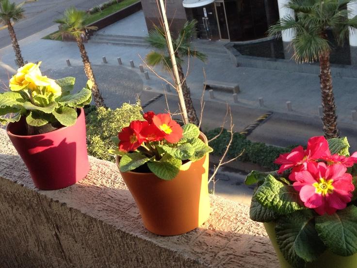 Mis flores en el balcón