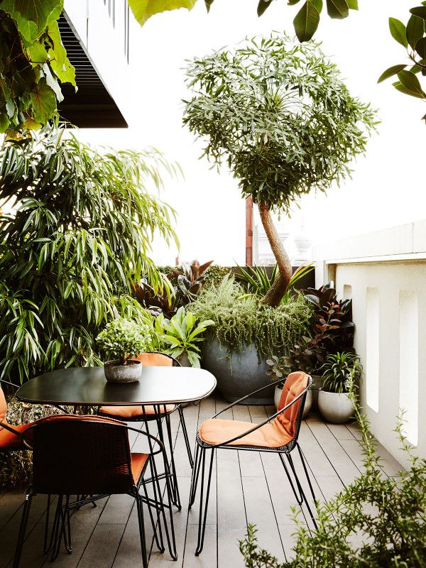 The lush rooftop garden of Owen Harris in Melbourne's Fitzroy is the ultimate inner city oasis.
