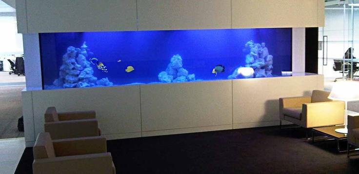 Aquarium Group - Large custom built marine office aquarium