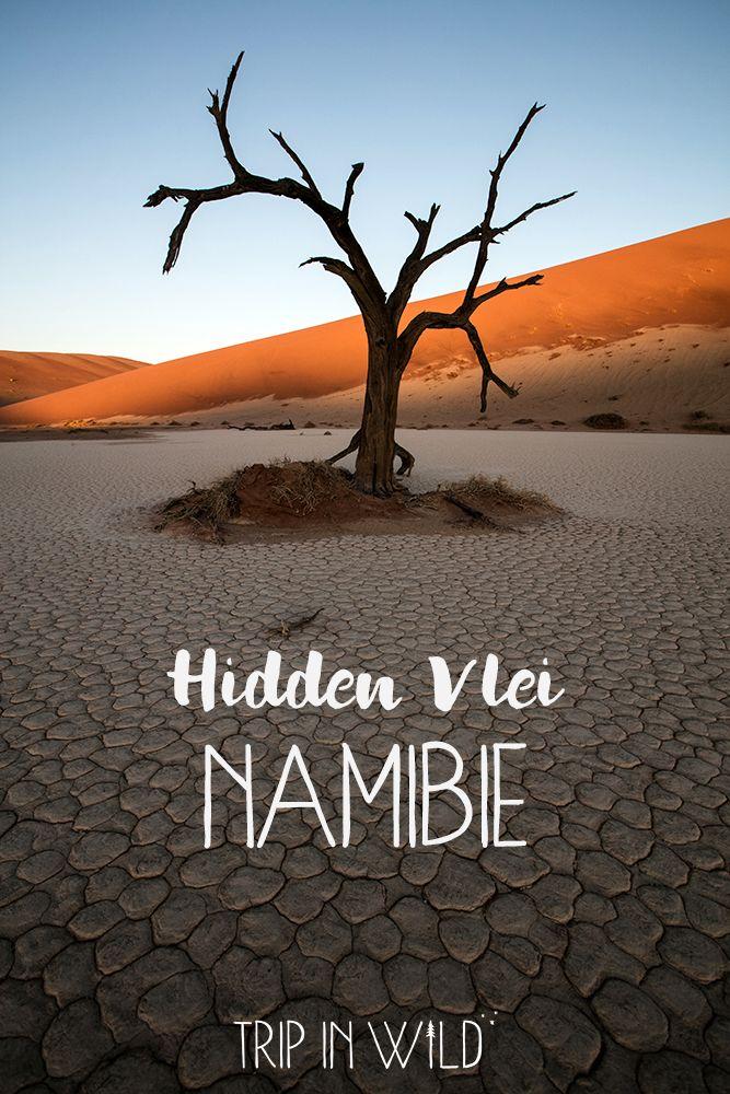 Hidden Vlei, paradis caché du désert du Namib