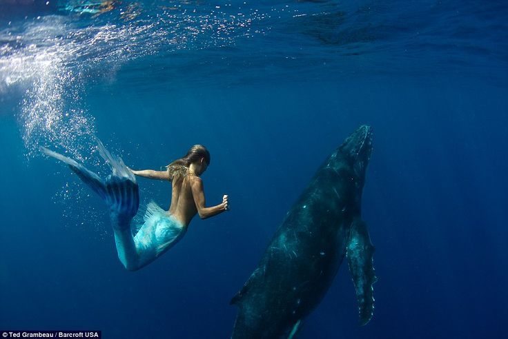 Real-life mermaid swims with whales using very own fish tail - and holds breath for two minutes on deep sea dives  Stunning: Photographer Ted Grambeau captured beautiful photographs of 36-year-old Hannah Fraser swimming with whales in the wild to promote their conservation