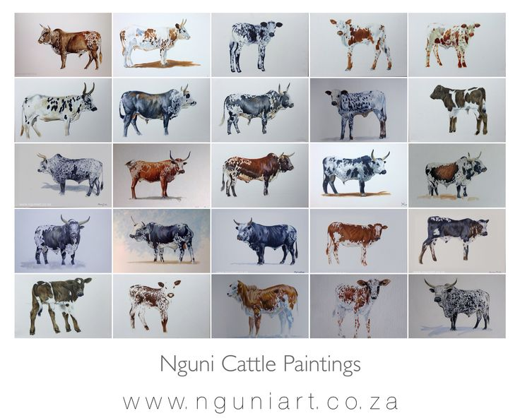 Nguni Cattle Paintings  Oil on Canvas  www.nguniart.co.za