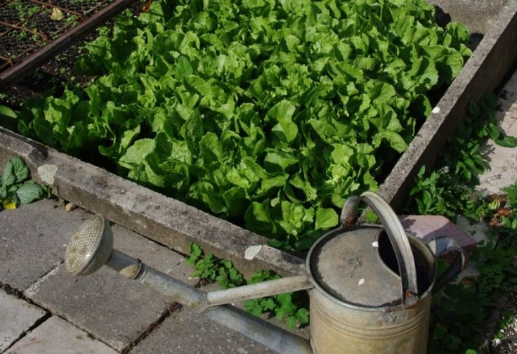 Kevés olyan hasznos, ehető növény van, amelyet a ház északi oldalán vagy kamra mögött, félárnyékban is termeszthetsz. Összegyűjtöttük ezeket.