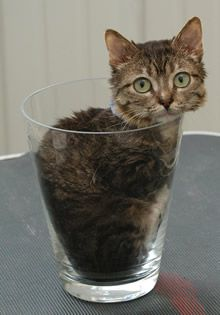 Smallest cat in the world. Amazing animals