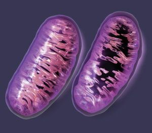 "Dr. Gary G. Kohls Global Research Fri, 06 May 2016 14:20 UTC     ""Mitochondrial damage is now understood to play a role in a wide range of seemingly unrelated disorders such as schizophrenia,… https://winstonclose.me/2016/07/14/thanks-big-pharma-for-the-mitochondrial-collateral-damage-by-dr-gary-g-kohls/"
