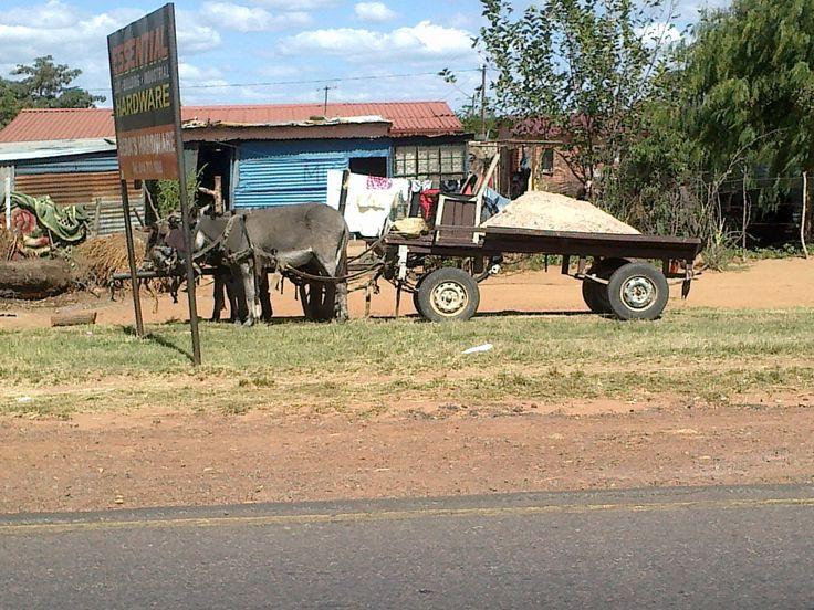 Donkey cart, Mokopane, Limpopo Province, South Africa