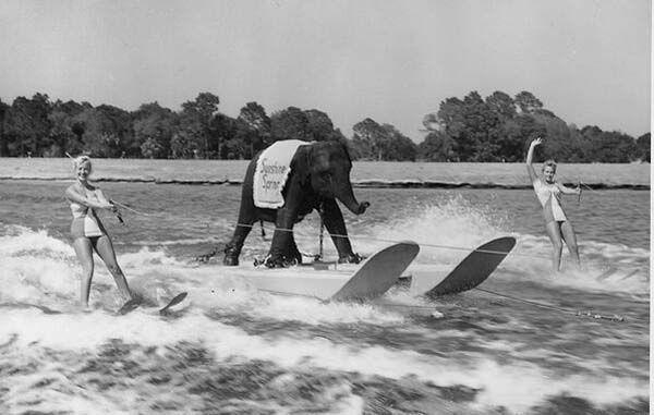 44.) Queenie, the skiing elephant (1950).
