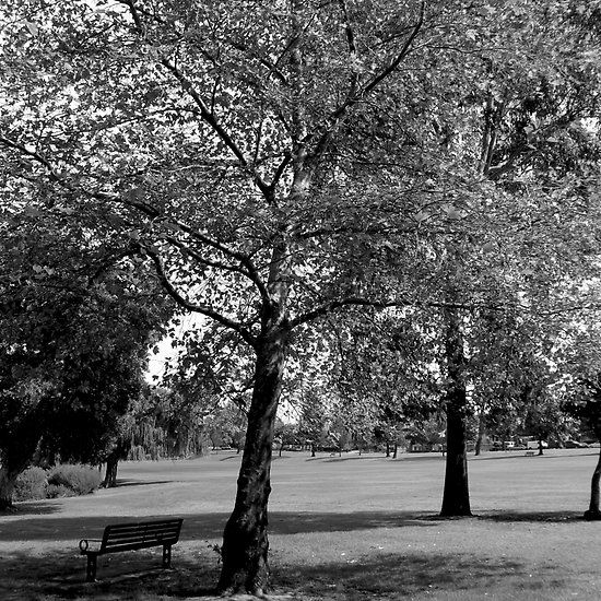 Black and white trees with park bench. Photograph by Tracey Everington of Tracey Lee Art Designs.