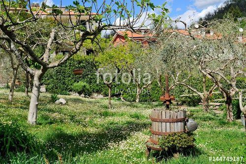 Vecchio torchio in giardino