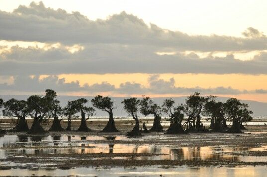 Walakiri mangrove beach