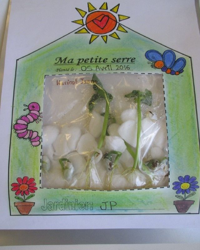 Les 25 meilleures id es de la cat gorie culture des haricots sur pinterest planter des - Quand semer les haricots verts ...