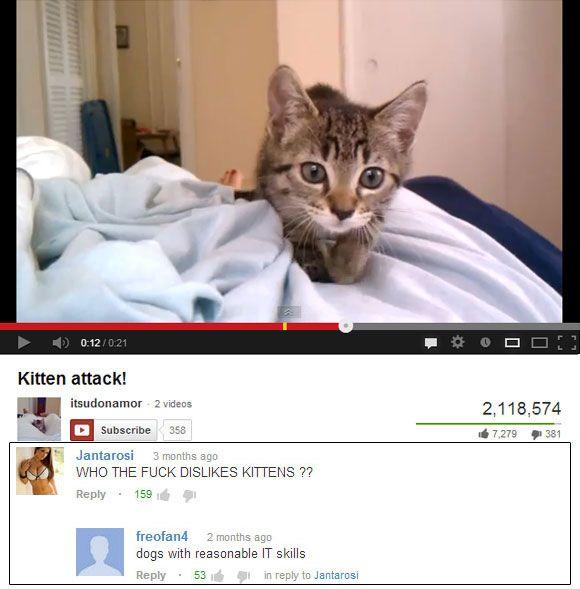 Kitten Attack http://www.shenhuifu.org/2017/04/