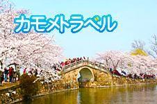 桜の季節の無錫