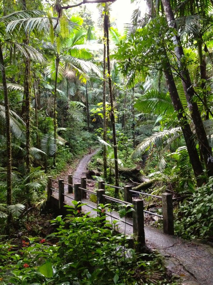 "El Yunque Rainforest in Puerto Rico. So crazy to think I've been here. I can still hear the ""CoKee""(:"