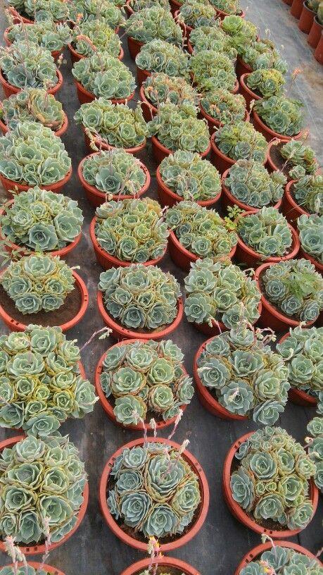 10 mejores im genes de venta de plantas de ornato for 10 plantas de ornato