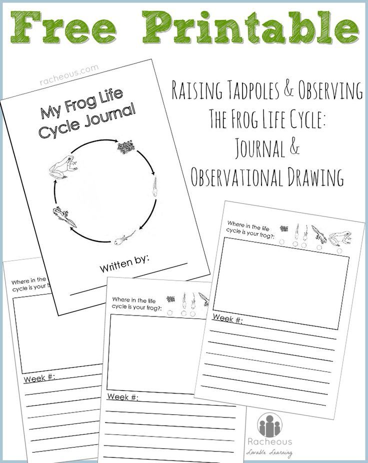 Free Printable Frog Life Cycle Journal - Racheous - Lovable Learning