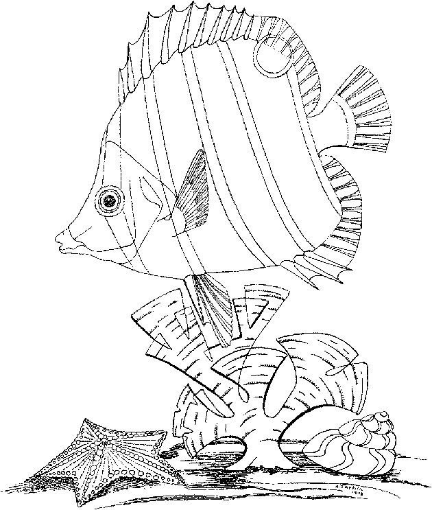 90 best Sea Creature Illustrations images on Pinterest Coloring - best of under the sea coral coloring pages