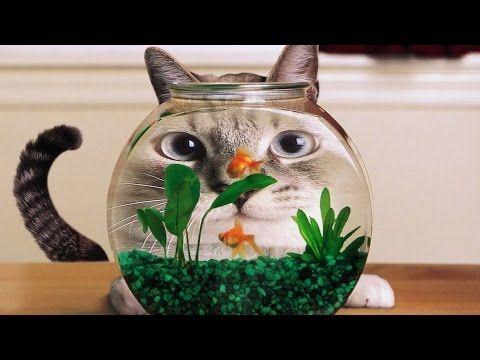 ПРИКОЛЫ С КОШКАМИ 2015 FUNNY CATS 2015 Compilation #2 - http://www.youneedalaugh.com/funny-cats/%d0%bf%d1%80%d0%b8%d0%ba%d0%be%d0%bb%d1%8b-%d1%81-%d0%ba%d0%be%d1%88%d0%ba%d0%b0%d0%bc%d0%b8-2015-funny-cats-2015-compilation-2/