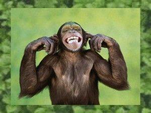 Monkey World.pps