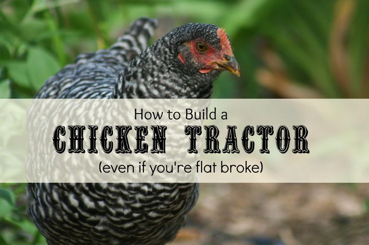 How to Build a Chicken Run (even if you're flat broke)
