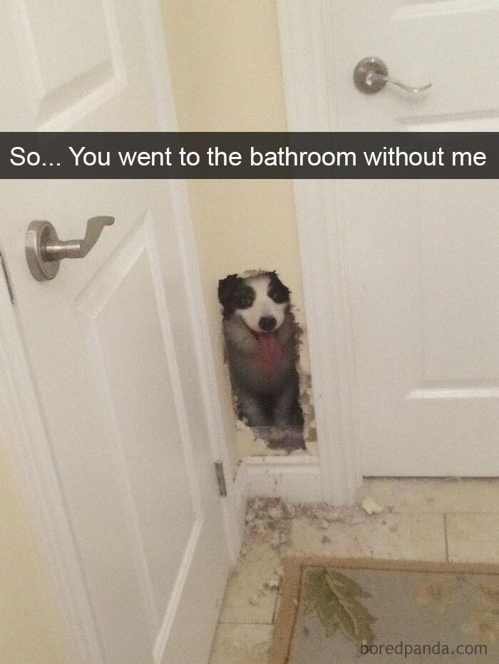 So You Went To The Bathroom Without Me Funny Animals Funny Animal Memes Funny Animal Pictures