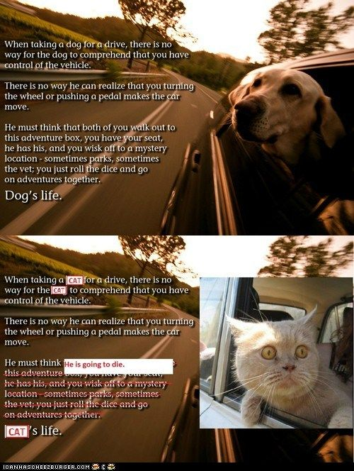 The difference between cats and dogs. lol