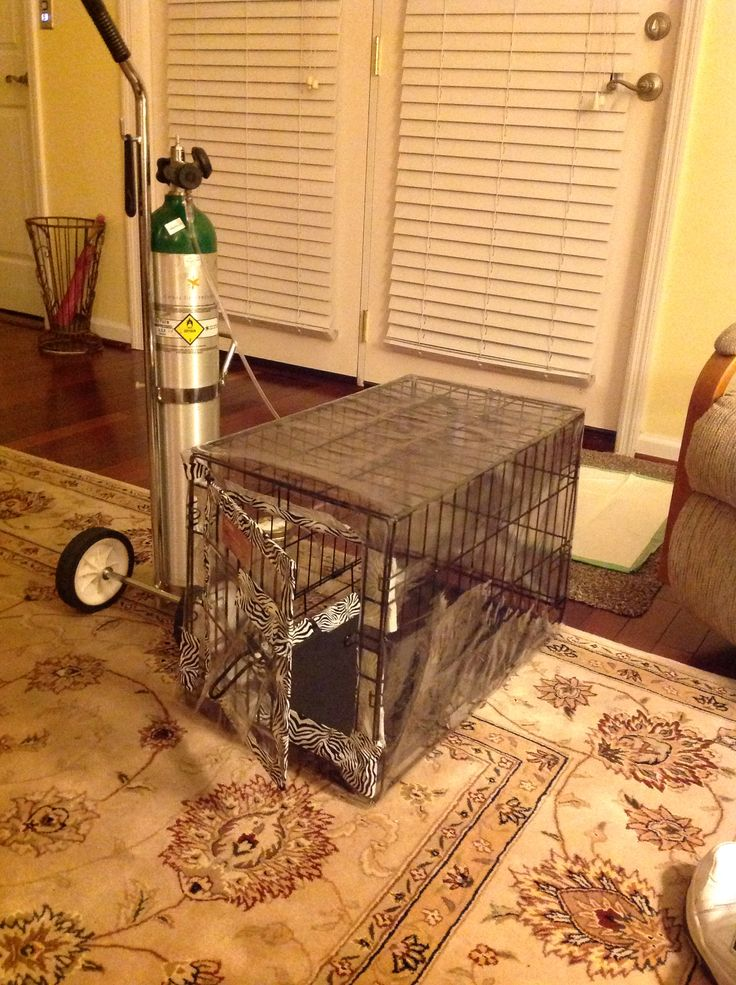 Home Made Oxygen Tent For Small Dog Suffering From