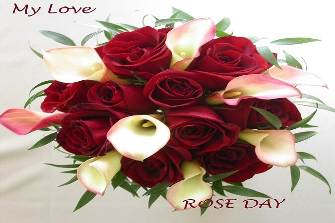 Rose Day Pics Free