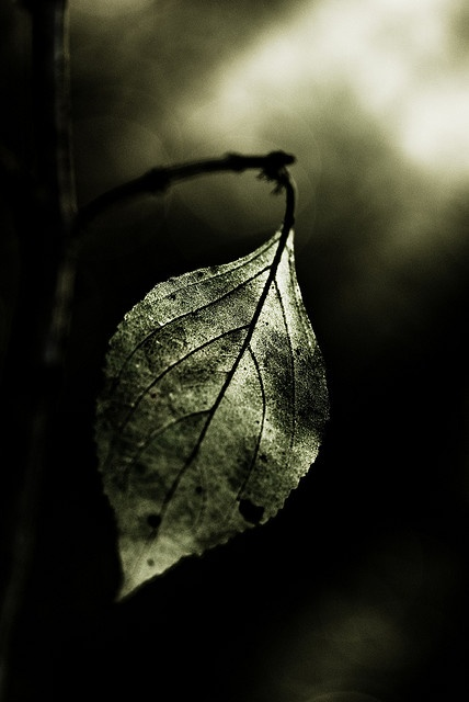 """""""The sticky little leaves aren't faith or salvation. They're the remnant of hope. They stave off his despair, demonstrating that despite the evil he has seen, there is at least one good and beautiful thing left.""""...She is not my equal; she is my better. She is my sticky little leaf. #GRa"""
