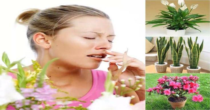 10 plantas que filtran el aire y lo liberan de alérgenos