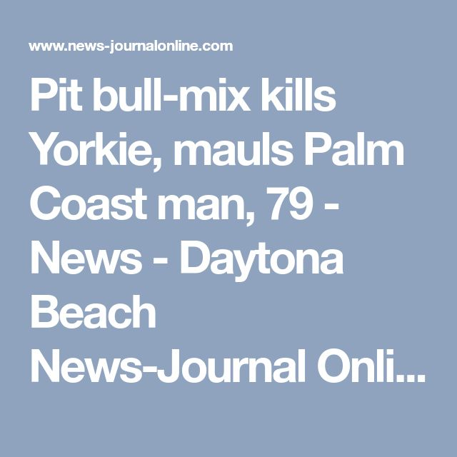 Pit bull-mix kills Yorkie, mauls Palm Coast man, 79 - News - Daytona Beach News-Journal Online - Daytona Beach, FL