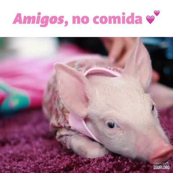 Abramos el corazón a todos los animales  #FriendsNotFood https://t.co/p1eUUG6xJm
