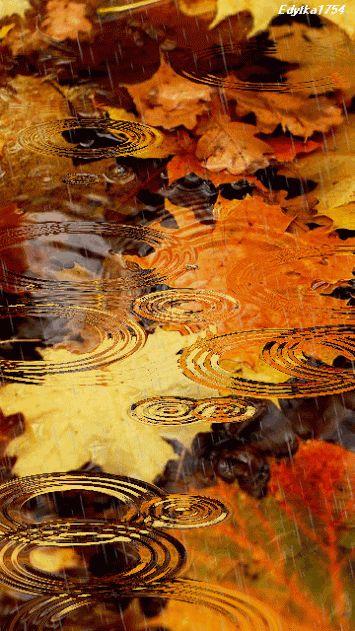 fall leaves in the rain