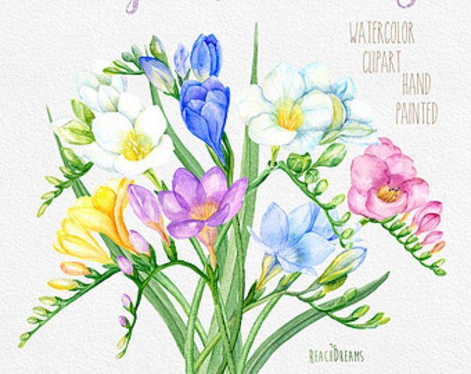 Magnolia Blumen Hand bemalte Clipart Aquarell. Hochzeitseinladungen, digitale Blumen, Scrapbooking, Hochzeitsstrauß, DIY-Einladungen